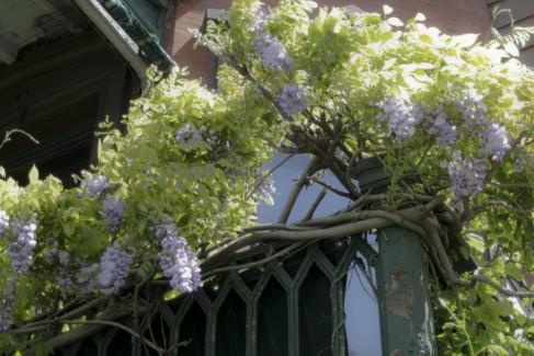 cropped-branchwhiscrop.jpg