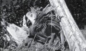 cropped-deadwood.jpg