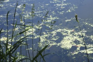 cropped-swampgrasscenral.jpg