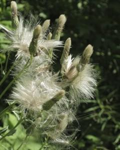 cropped-swampgrasstemperance.jpg